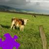 Pasture Jigsaw