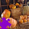 Pumpkins Jigsaw